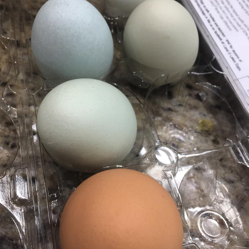 Pretty Farm Fresh Eggs!